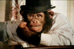 pg chimp